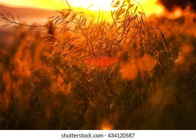 blades of grass and sunset
