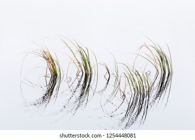 Blades of grass in the water with reflections