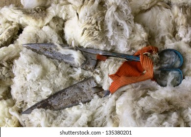 Blades on a bed of Merino wool used to shear sheep in New Zealand.