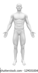 Blank Anatomy Figure - White Male Body Front view