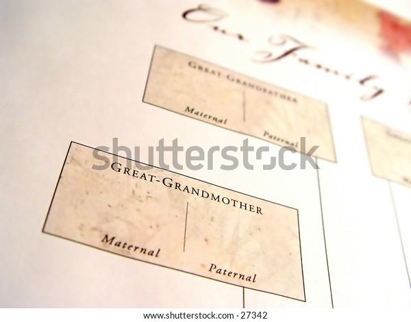 Blank family tree taken closeup