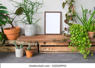 Blank frame photo with tropical plants and cactus. Tree lover and earth day concept