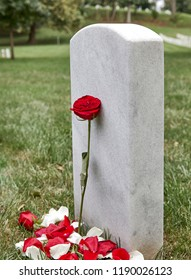 A blank headstone in a cemetery with rose and rose petals around the headstone and shallow depth of field