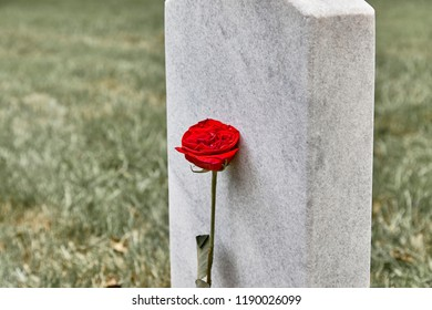 A blank headstone in a cemetery with rose and shallow depth of field