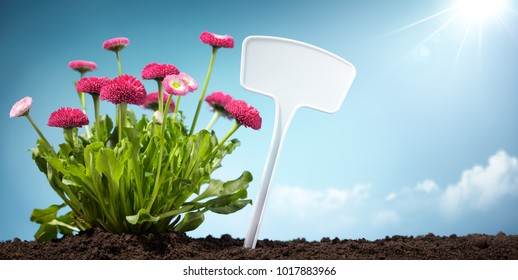 Blank label with spring flower