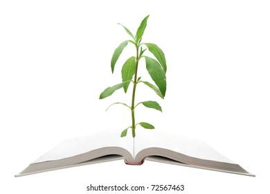 blank magic book with green tree