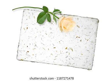 Blank for message with nice beige rose
