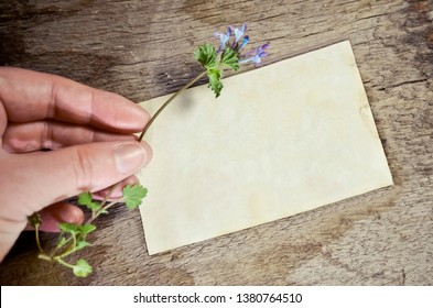 Blank Notecard with Hand Holding Flower on Rustic Wood Background