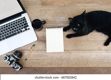 blank notepad with laptop for travel planning concept or calendar of world cat day  8 august 2017.workplace top view,flat lay