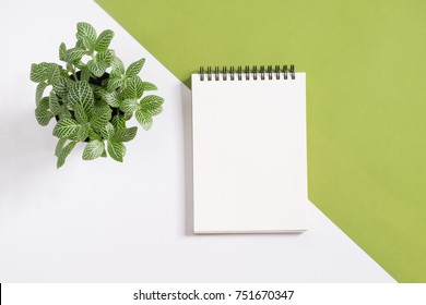 Blank notepad with plant pot on white and green background