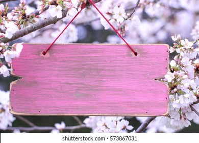 Blank pink wood sign hanging from tree branch with spring flowers; springtime background with painted copy space and pink and white blossoms blurred in background