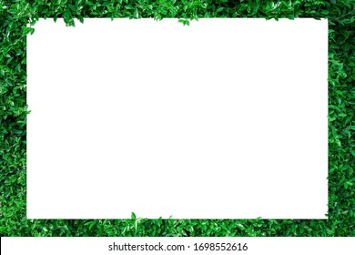 A blank sheet of white paper with copy space on a leaf background  for inserting text or pictures.