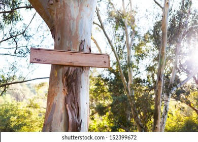Blank signboard on a tree in a forest