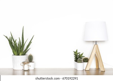 Blank wall with cactus. Wall art mock up.