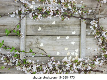 Blank wood sign by pink and white country hearts and spring tree blossoms hanging on rustic antique wooden background; Valentine's Day holiday frame with white flowers, hearts and copy space