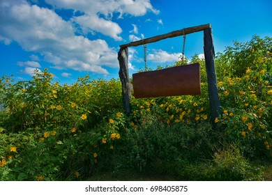 Blank wooden sign with yellow flower and blue sky