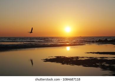 Blankenberge Belgium North Sea Coast at Sunset