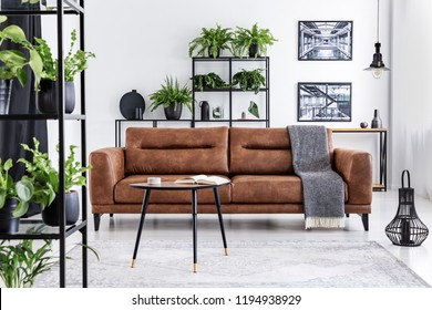 Blanket on brown leather settee in living room interior with posters, plants and table. Real photo