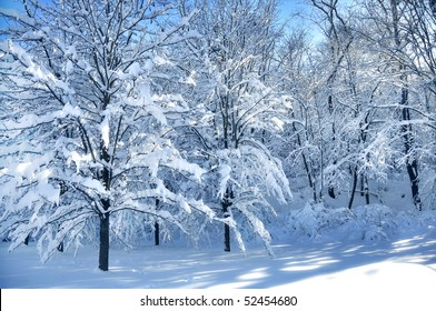 blanket of snow covering trees