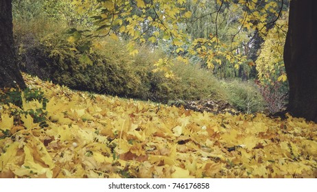 Blanket of yellow leaves between two trees in autumn park, yellow beauty
