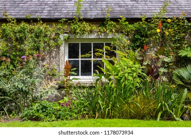 Blarney, Republic of Ireland - August 16th 2018: Beautiful plants and flowers in the grounds of the historic Blarney Castle in Republic of Ireland.