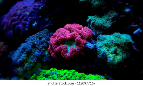 Saltwater Aquarium Images, Stock Photos & Vectors | Shutterstock