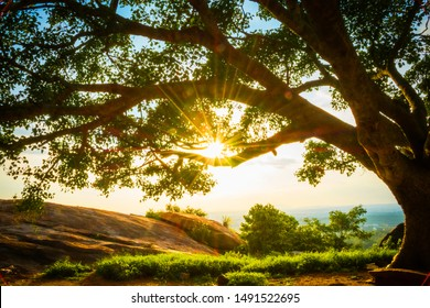 Blazing Sun Tough A Big Tree Branch