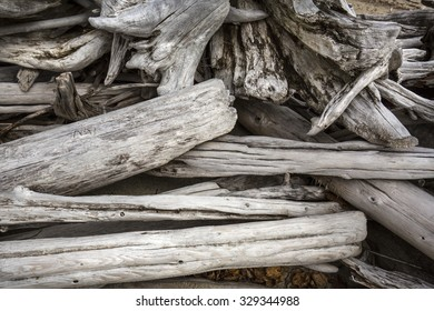 Bleached driftwood stump with crossed roots protruding into the sand of a beach on Flagstaff Lake, with fall foliage on the shoreline, in northwestern Maine.