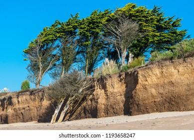 Bleached trees on a beach
