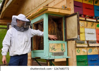 Bled, Slovenia - May 20, 2017: Local beekeeper Blaz Ambrozic handling docile Carnolian bees in boxed hives apiary at Kralov Med in Selo near Bled Slovenia in Spring