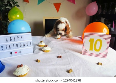 Blenheim Cavalier King Charles Spaniel birthday party with dog cupcakes