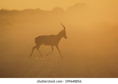 Blesbok - Wildlife Background from Africa - Colorful Nature