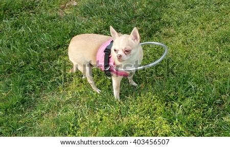 blind dog vest