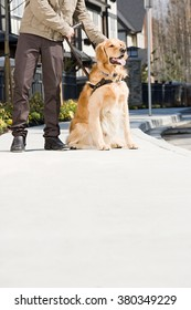 Blind man with guide dog on sidewalk