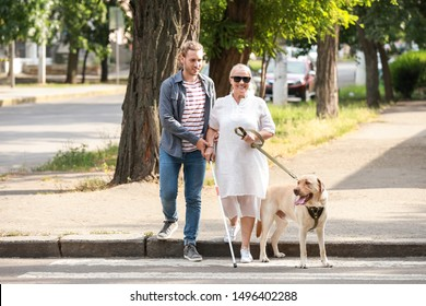 Blind mature woman with guide dog and son crossing road
