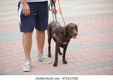 blind person with guide dog near his leg