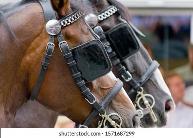 Blinkered horses, Ravensburg, Baden-Wurttemberg, Germany