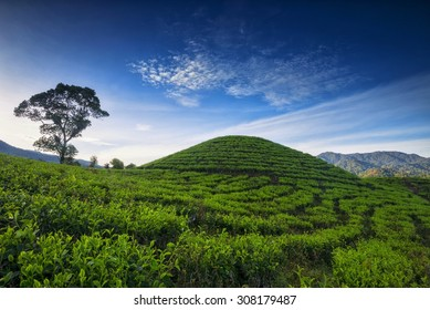 Bliss... tea plantatiom