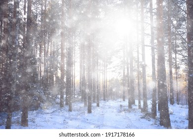 blizzard in the forest background, abstract blurred background snowflakes falling in the winter forest on the landscape