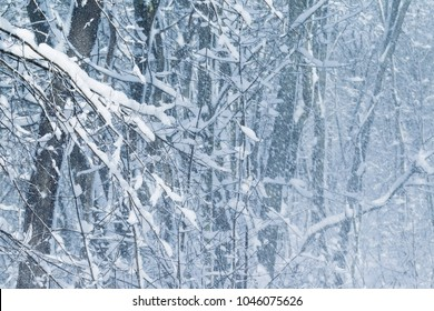 Blizzard in forest in cold winter