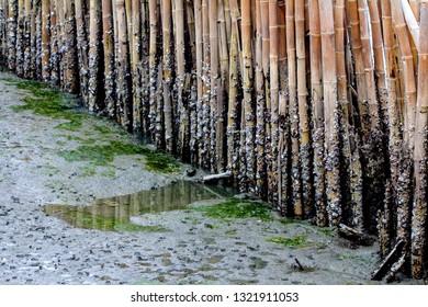 Block the coast, Bamboo wall in mangrove education center Samut Sakhon, Thailand