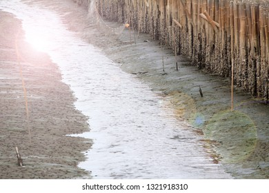 Block the coast, Bamboo wall in mangrove education center Samut