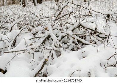 Blockages with snow – covered fallen trees and branches in wilds in winter – image