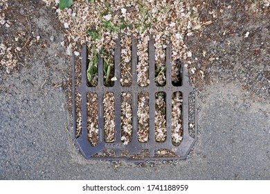 Blocked road drain with leaves and vegetation