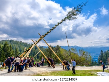 Blomberg, Germany - May 1: A traditional maypole is being set up by the local bavarians during the typical May Day festival on May 1, 2017 on Blomberg Mountain in Germany.
