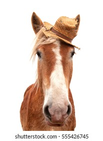Blond Belgian draft horse wearing a straw hat, looking at the viewer head on, isolated on white