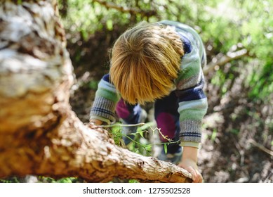Blond boy climbing a tree by himself overcoming a challenge in childhood, photo from above.