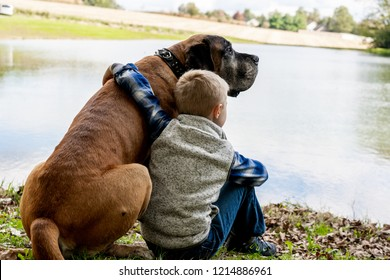Blond boy with a large brown dog, English Mastiff are sitting at a lake, a pond, or a river. Cool, clear, sunny day. Clouds reflecting in a water. View from a back.  Boy is hugging a dog.