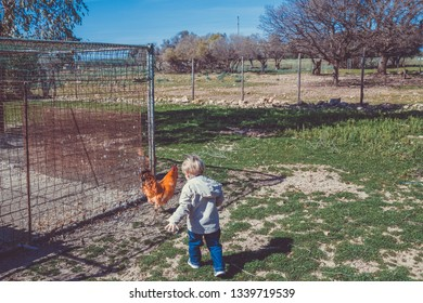 A blond child, two years old, is trying to catch a rooster and is chasing it. The rooster is fleeing, afraid of the child. It's a sunny winter day.
