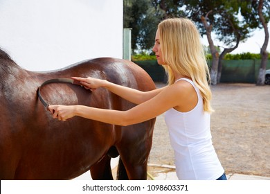 Blond girl cleaning brown horse with sweat scraper tool on white wall